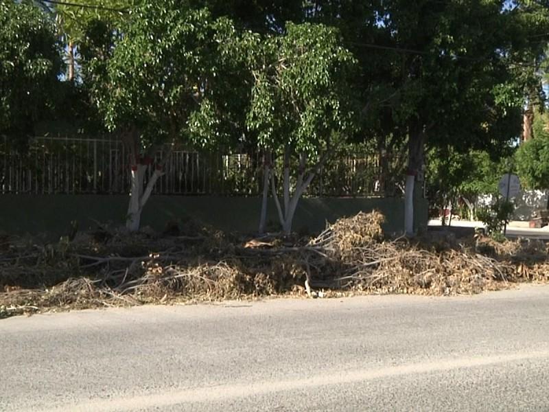 Ramas y hojas se acumulan en la col. Guerrero