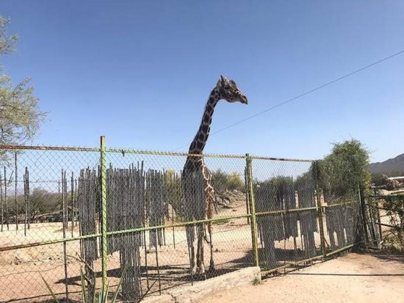 Reabren al público el Centro Ecológico de Sonora