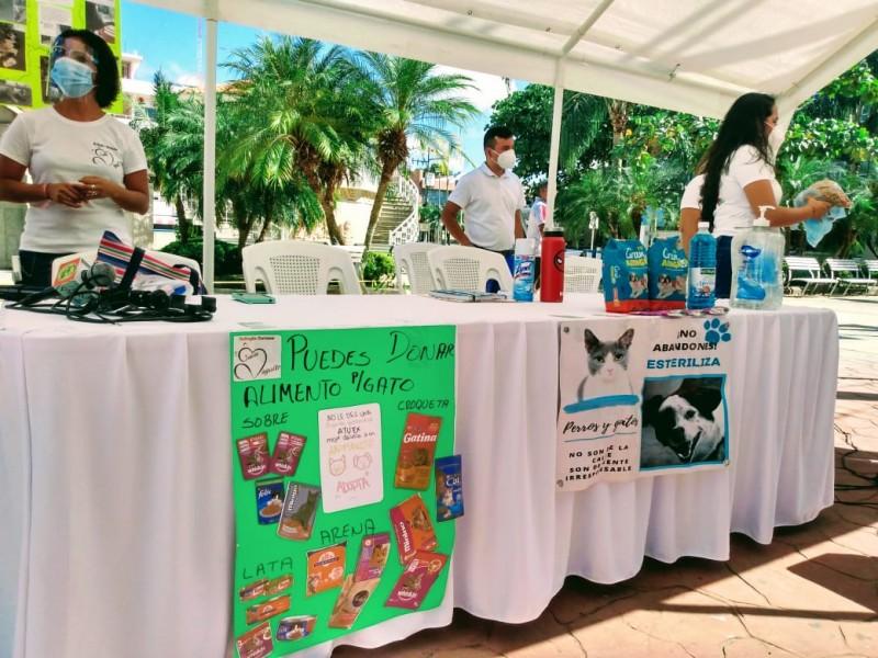 Realizan Croquetón para apoyar a albergues de animales