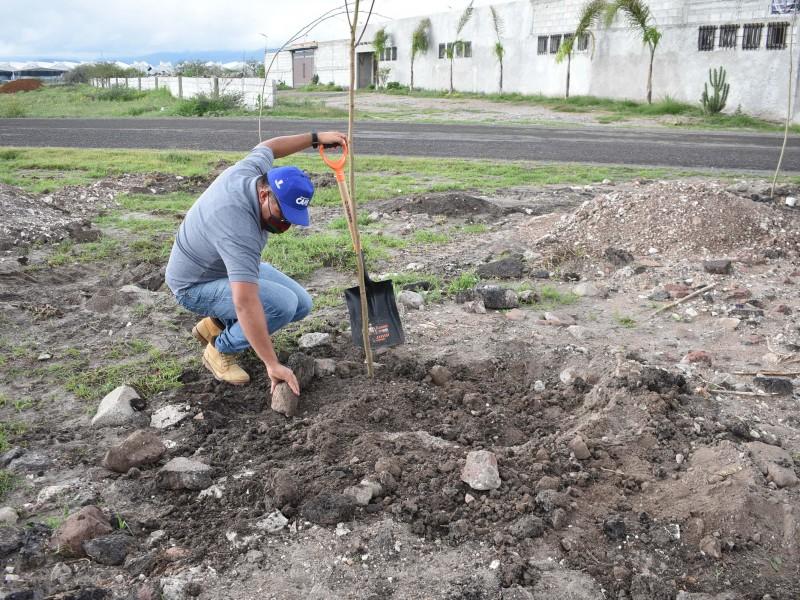 Realizan Jornada de Reforestación en Pedro Escobedo