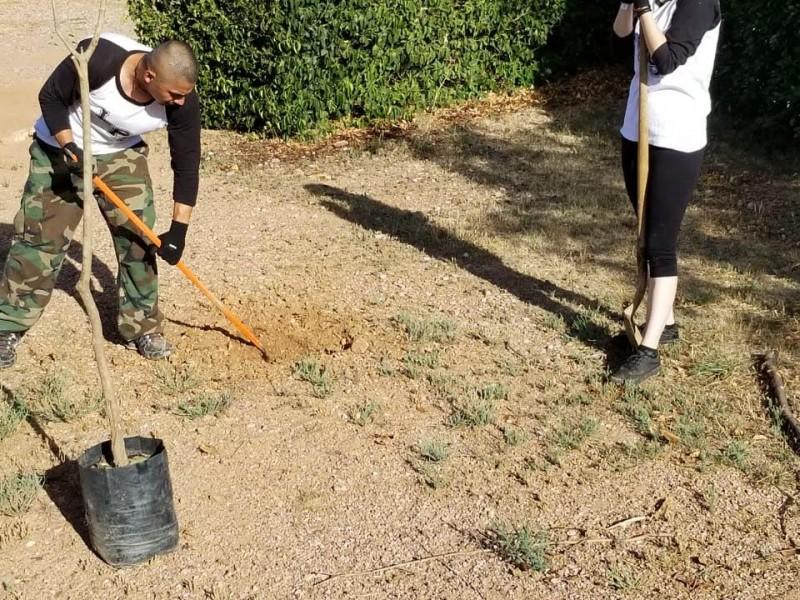 Realizan reforestación en Unison jóvenes de Eco Barrio