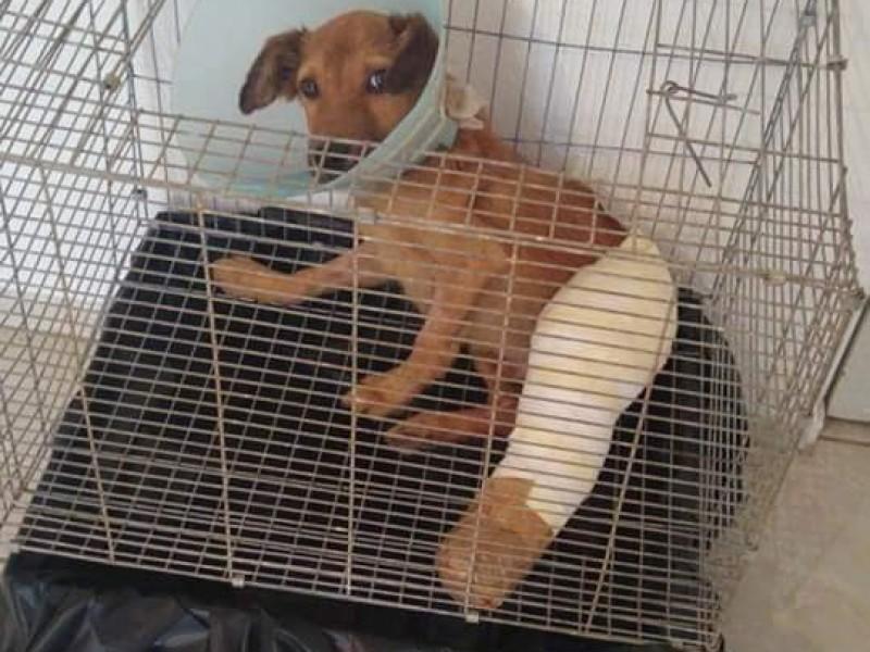 Realizarán rifa para pagar tratamientos de animales maltratados