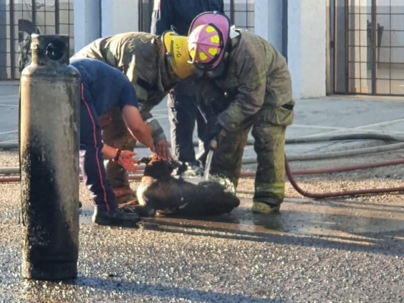Rescatan del fuego a una persona y a su mascota