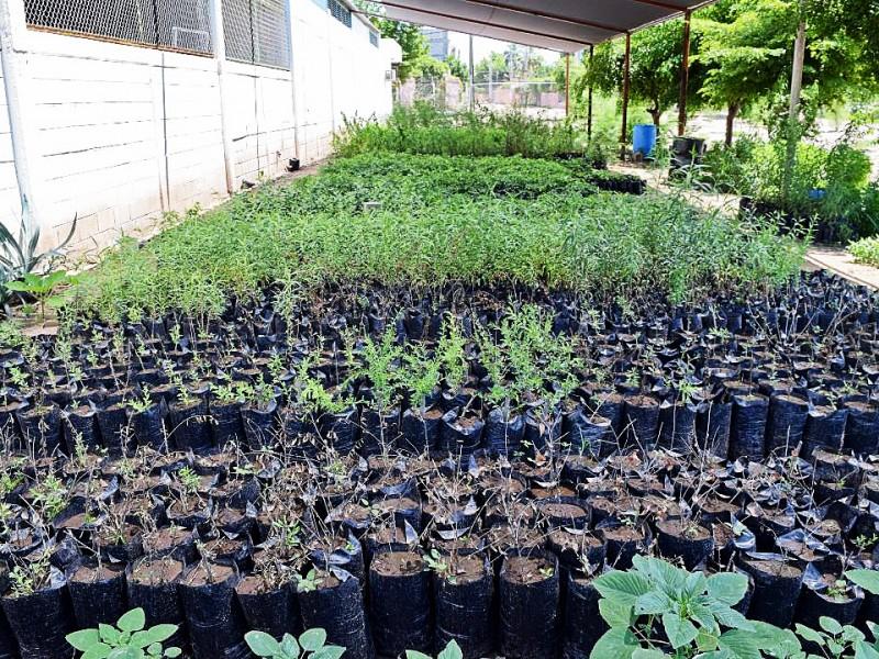 Recibe vivero 500 plantas, las donarán a la comunidad