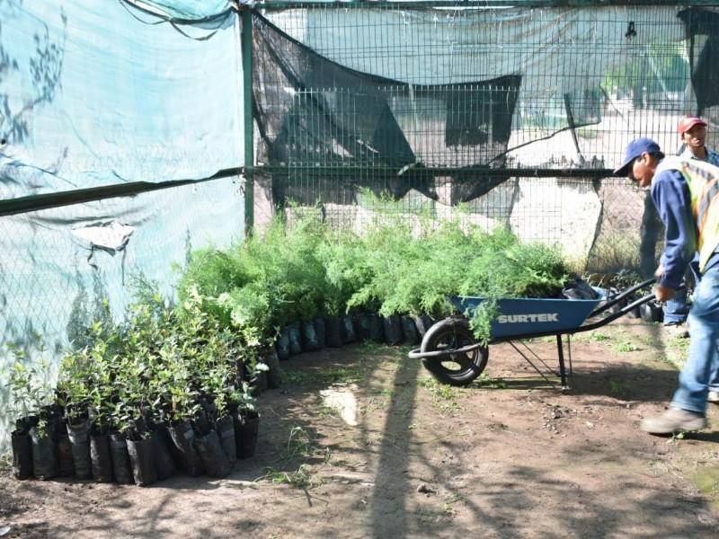 Reciben más de 30 mil árboles en donación