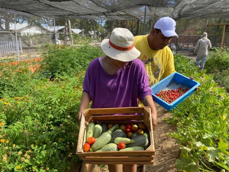 Reconversión de Islas Marías comienza a dar sus primeros frutos