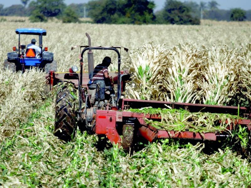 Recortes al campo afectarán a productores en Querétaro