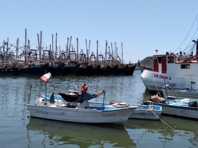 Recupera México certificación para exportación de camarón a EU