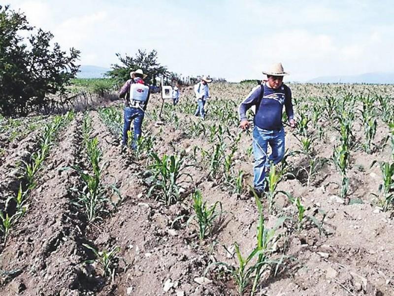 Recursos para el campo del 2022 no rescatará a productores