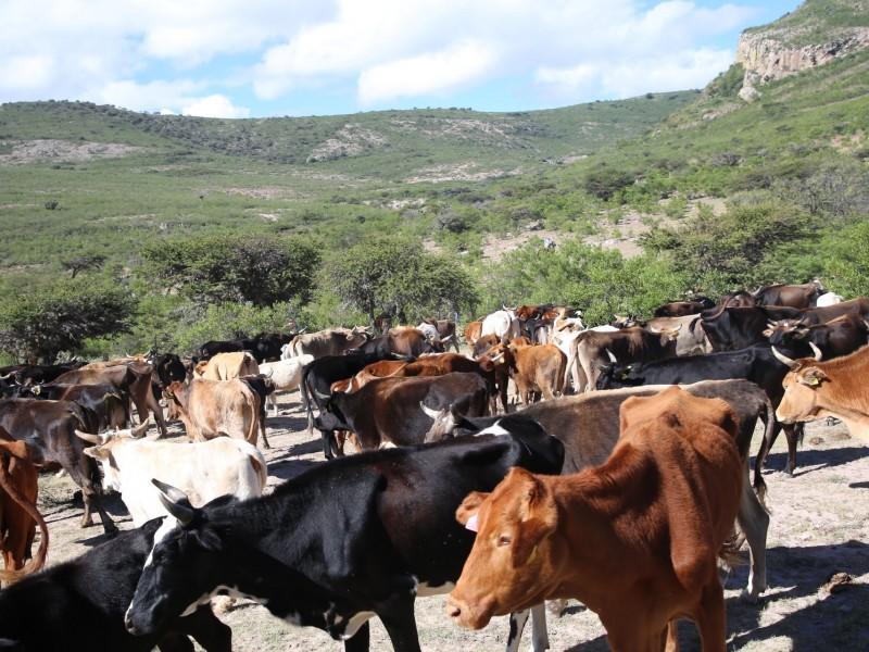 Reducción de recursos federales afectará a la sanidad animal