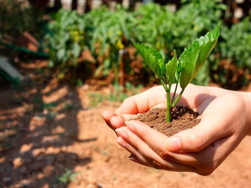 Reduce a más de la mitad recursos para medio ambiente