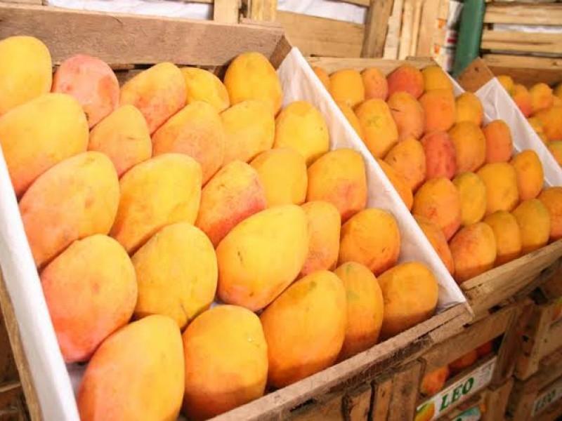 Reduce Chiapas producción de mango