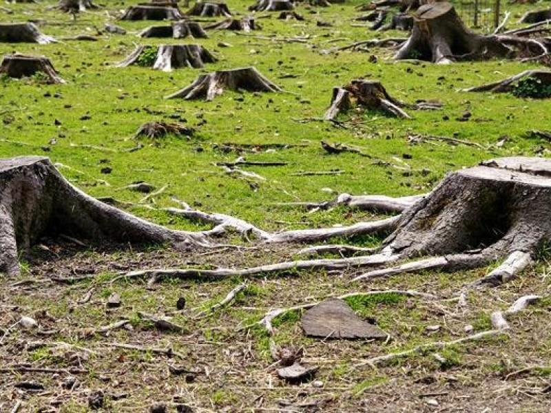 Reducen denuncias por tala y poda de árboles en Hermosillo