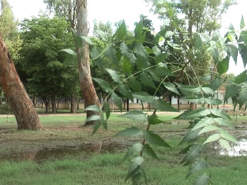 Reemplazan árboles caídos en Parque Madero