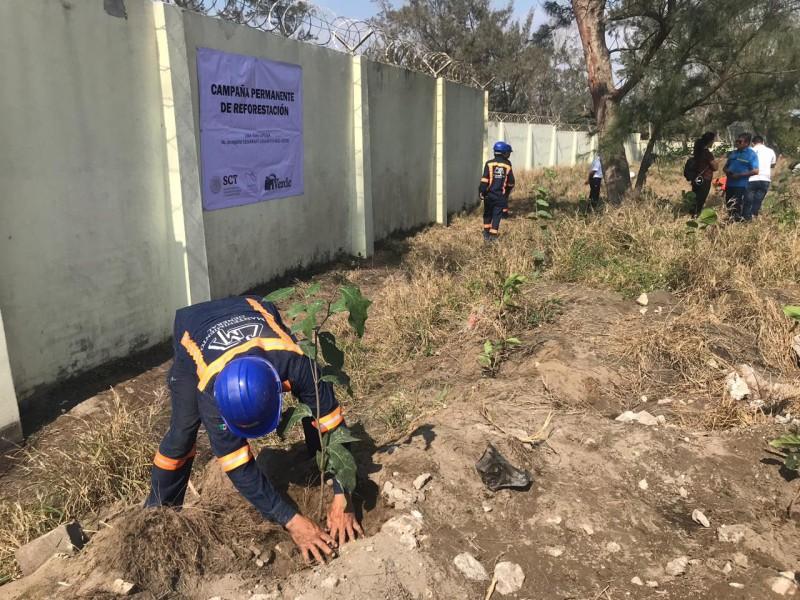 Reforesta Apiver zona norte para evitar polvareda