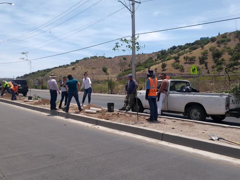 Reforestan área verde en  fraccionamiento San Miguel.
