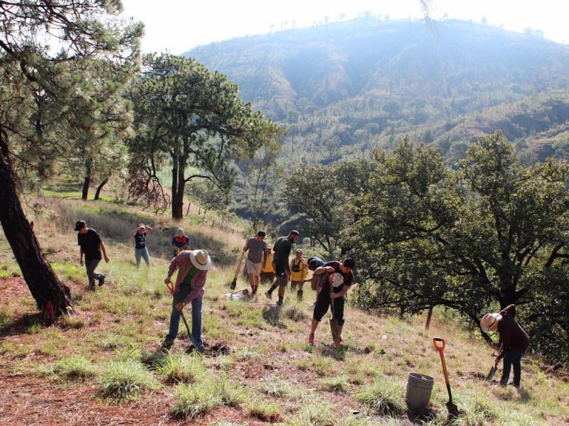 Reforestan La Primavera con 230 pinos
