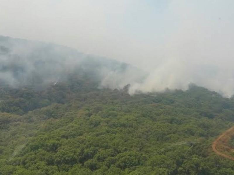 Reforestarán con 25 mil árboles el cerro de San Juan