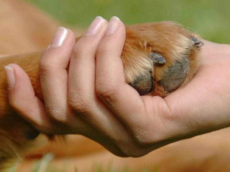 Registran 496 adopciones de mascotas en este 2020