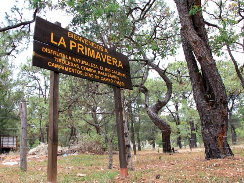 Registran 9 mil hectáreas deforestadas en el bosque La Primavera