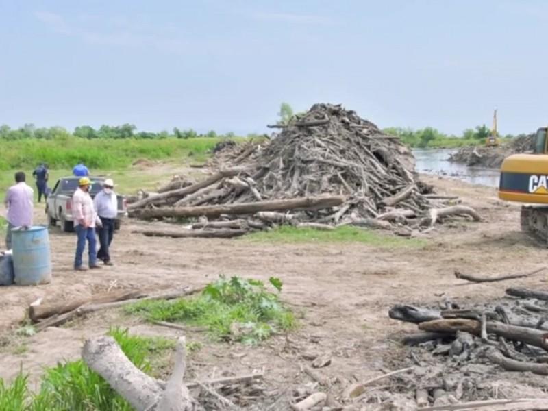 Remueven en Tecuala árboles arrastrados en inundación de 2018