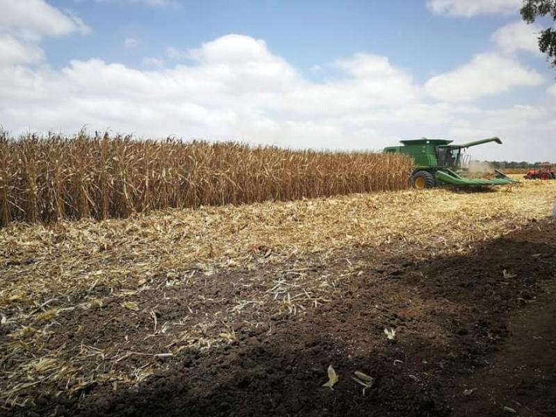 Renegocía la AARSP contratos de maíz libre a la alza