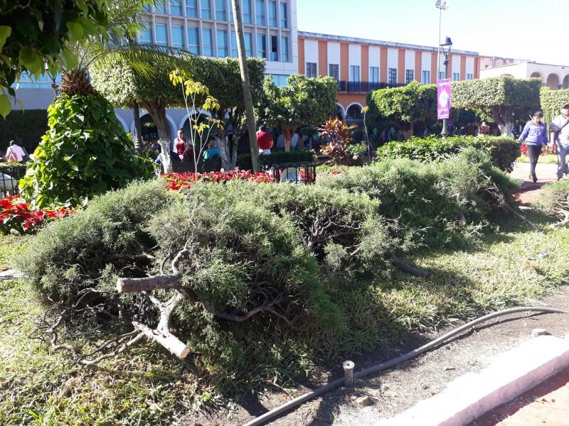 Renovará parques y jardínes imagen de plaza principal