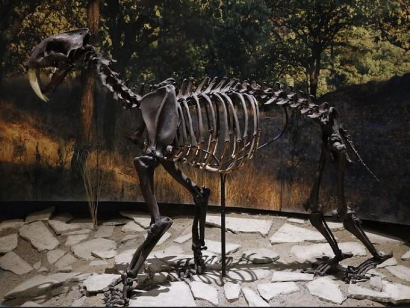 Renuevan Museo de Paleontología en Guadalajara