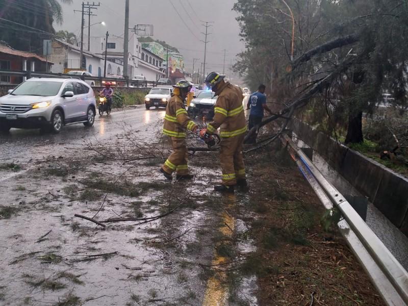 Reporta Protección Civil árbol caído en libramiento por fuerte lluvia