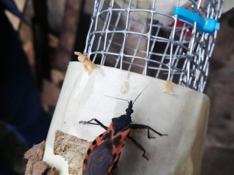 Reportan 51 casos de enfermedad de Chagas en Veracruz