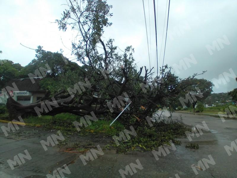 Reportan caída de árbol sobre una vivienda en Barrio Nuevo