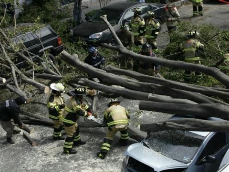 Reportan caída de árboles y encharcamientos por lluvias