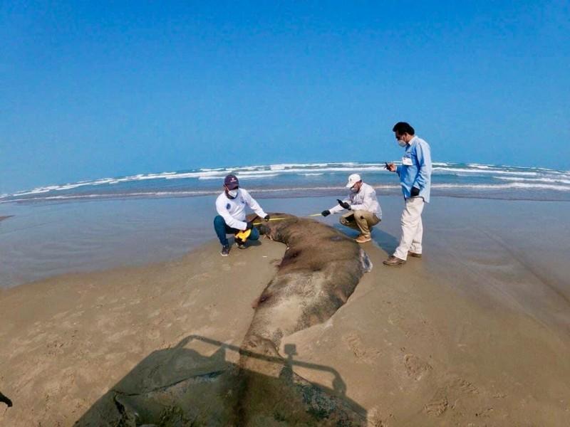 Reportan muerte de especies marinas