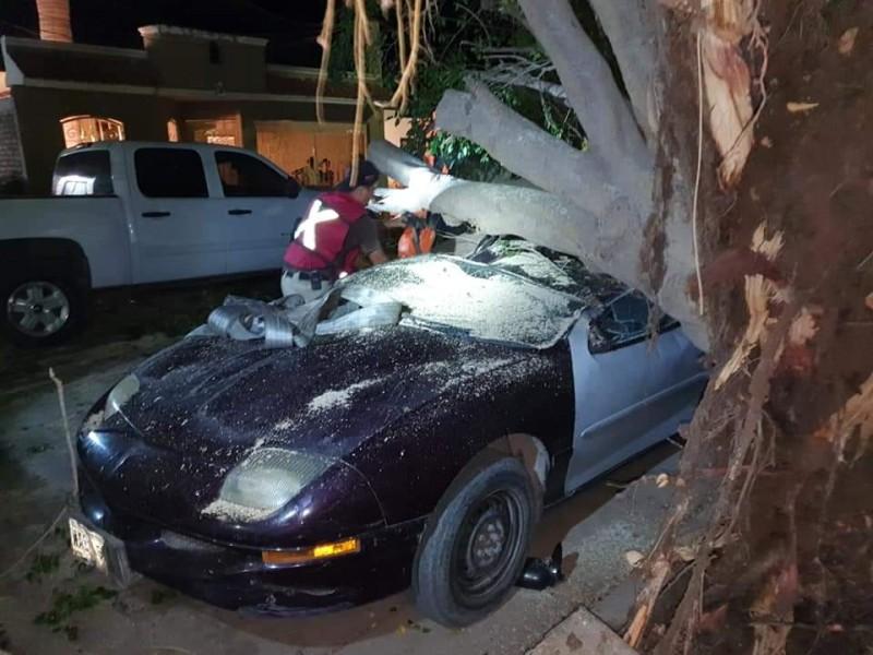 Reportan vehículos afectados tras caída de árboles en LM