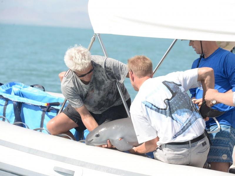 Reporte de la conservación de la vaquita marina