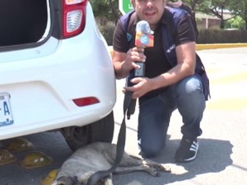 Reportero interrumpe transmisión para salvar a perrita