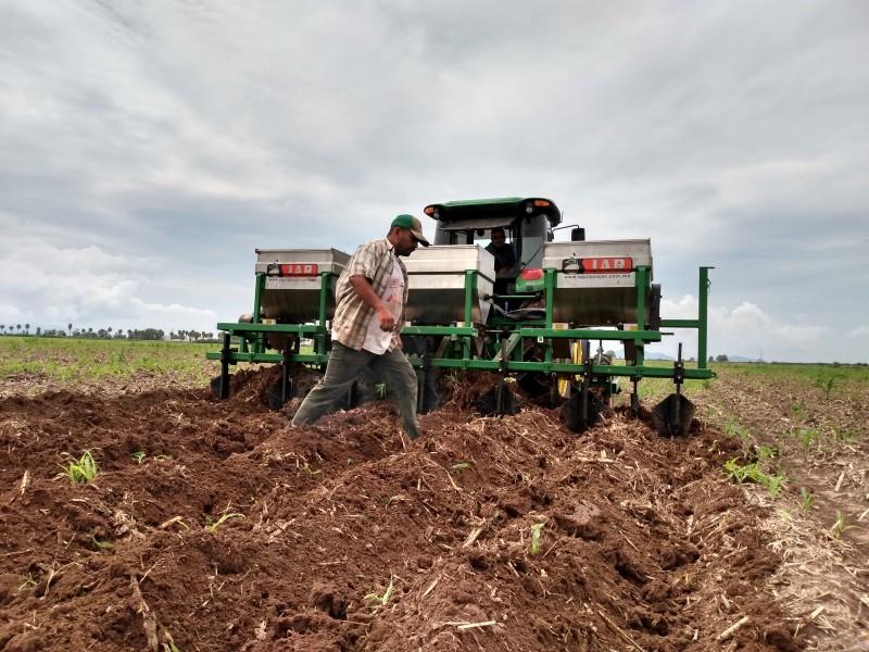 Repunta economía de familias con trabajo del campo
