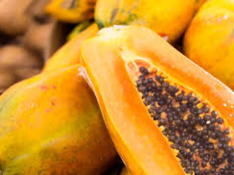 Repunta producción de papaya en la entidad