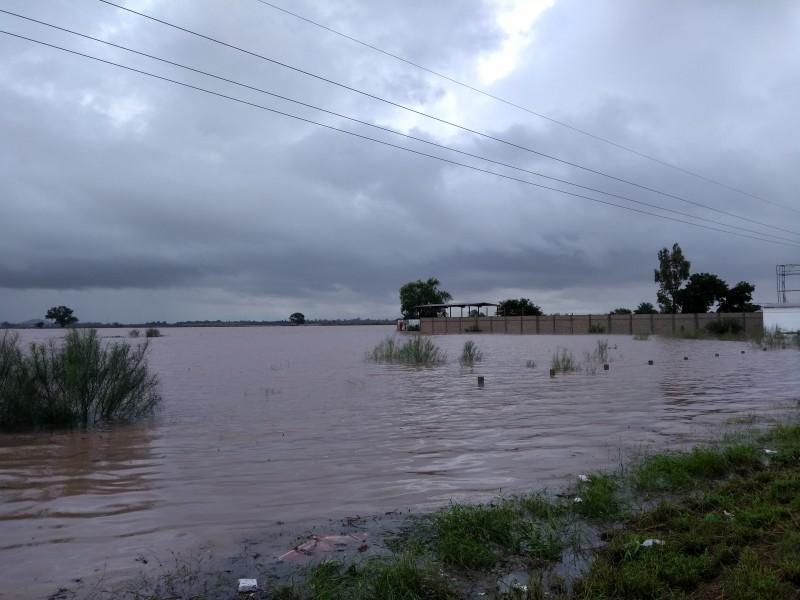 Requiere sector agrícola poda de mangle en drenes