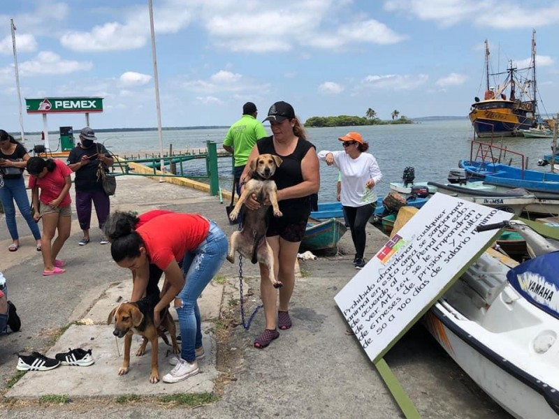 Rescatan 4 perros abandonados en Isla de Alvarado