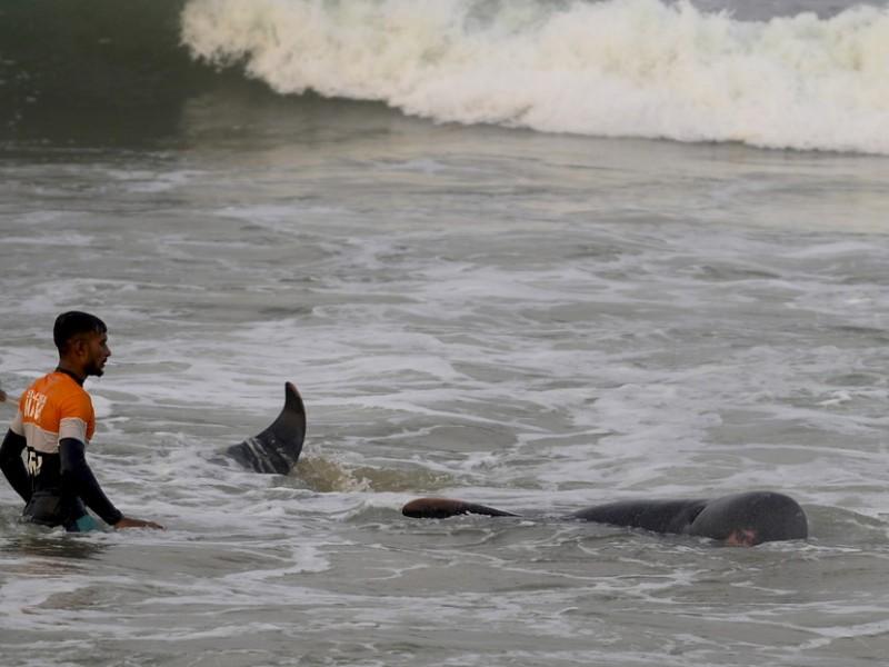 Rescatan a 120 ballenas en Sri Lanka