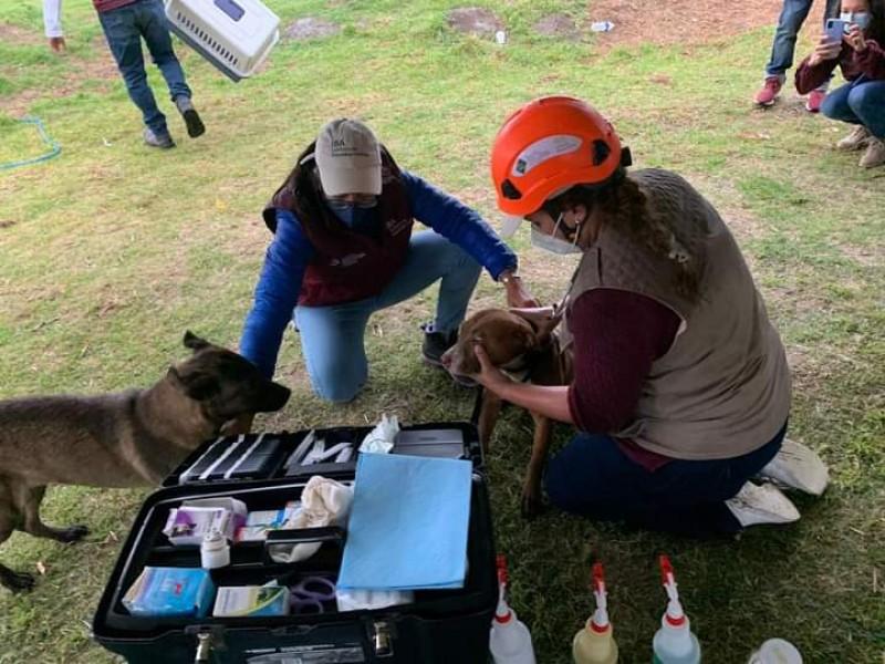 Rescatan a perritos del fondo del socavón