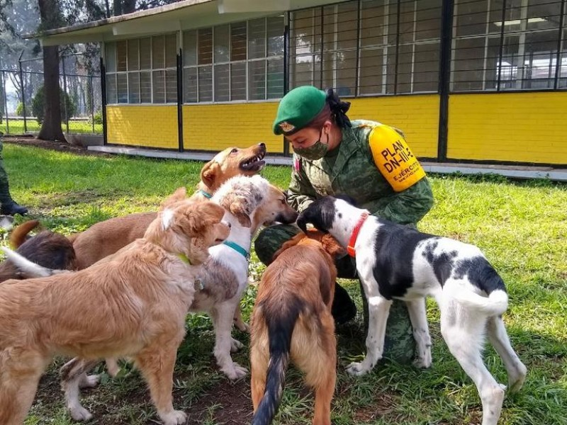 Rescatan a perritos en la construcción del aeropuerto Santa Lucía