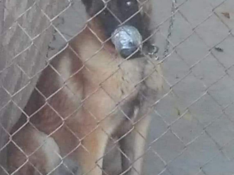Rescatistas de animal denuncian maltrato animal en Cajeme