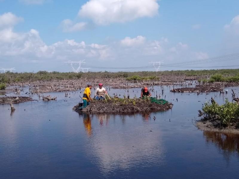 Restauran zona de manglar en Tuxpan