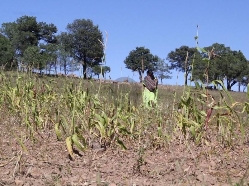 Restricción en extracción de agua afecta a cultivos afirman agricultores