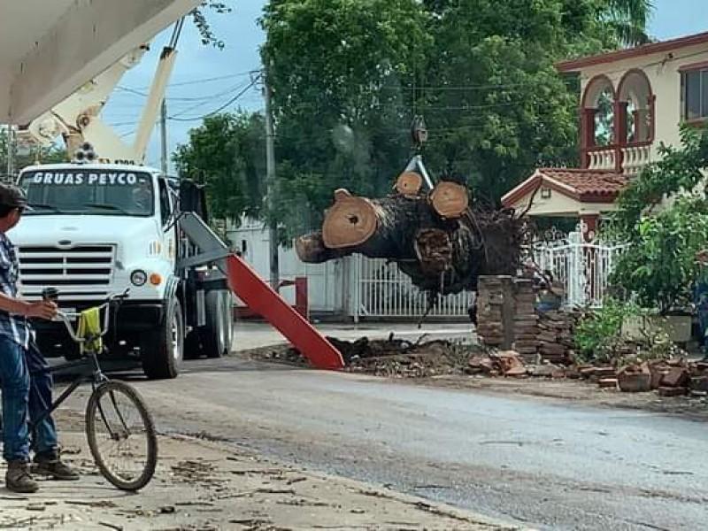 Retiran árboles caídos en Guamúchil