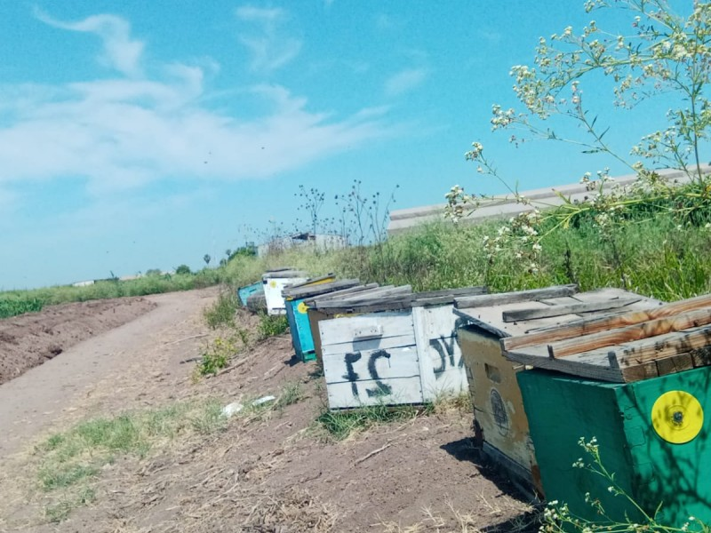 Ricardo Villanueva: un héroe en la conservación de abejas