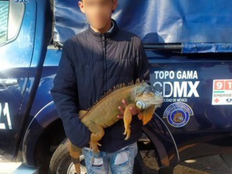 Saca a pasear a su iguana; termina detenido