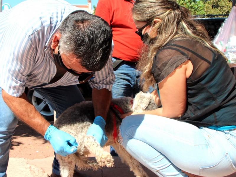 Salud Pública Municipal activa en vacunación de mascotas